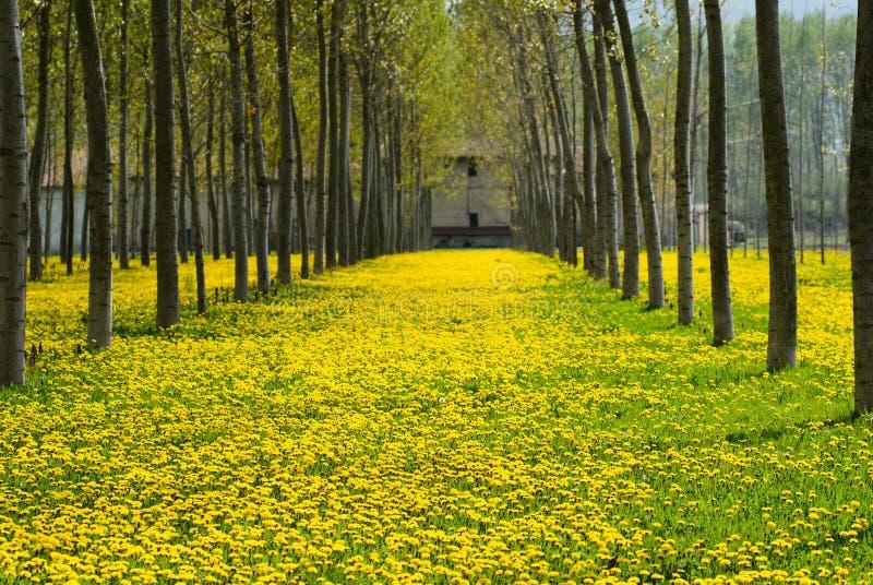 Blom och respiratoriska allergier arkivfoto