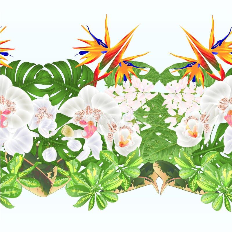 Blom- ordning för tropiska för gräns sömlösa blommor för bakgrund tropiska med Strelitzia och vit orkidéPhalaenopsisphilode royaltyfri illustrationer