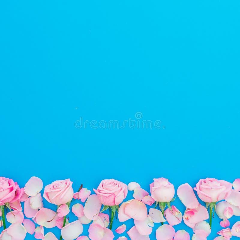 Blom- ram av rosa rosor och kronblad på blå bakgrund Lekmanna- lägenhet, bästa sikt Kvinnadagferie arkivfoton