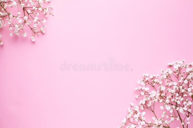 Blom- ram av vita blommor på rosa pastellfärgad bästa sikt för tabell och plan lekmanna- stil Modesommarf arkivbild