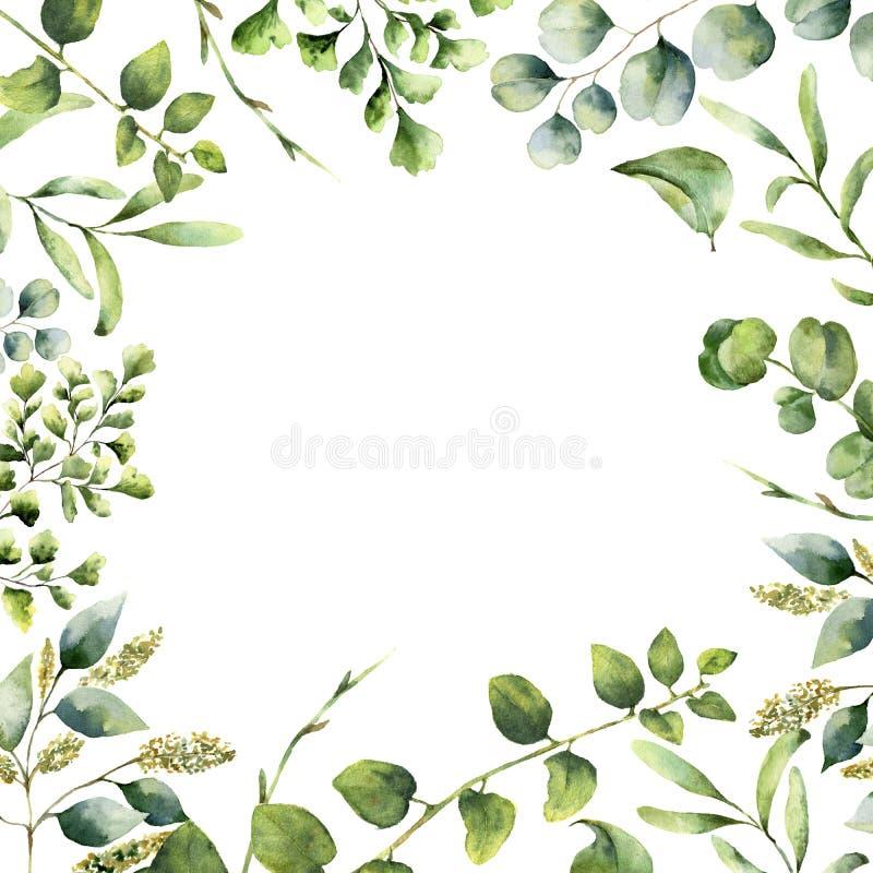 Blom- ram för vattenfärg Hand målat växtkort med eukalyptus-, ormbunke- och vårgrönskafilialer som isoleras på vit