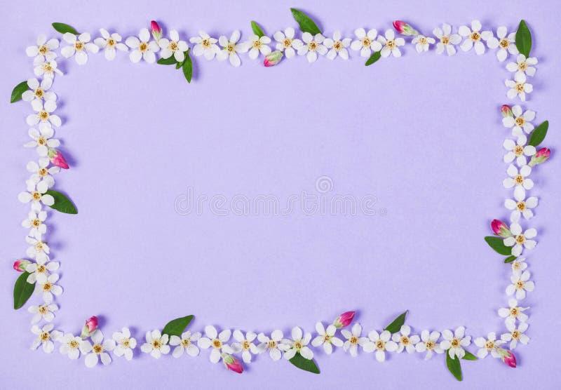Blom- ram som göras av vita vårblommor? gren sidor och rosa färgknoppar på pastellfärgad lila bakgrund Lekmanna- lägenhet royaltyfria bilder