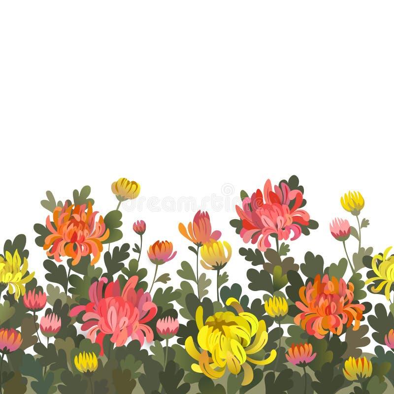 Blom- sömlös gränsbakgrund med krysantemumblommor stock illustrationer