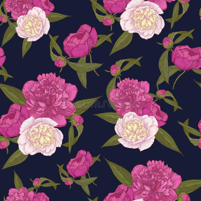 Blom- sömlös modell för vektor med buketter av hand drog rosa och vita pioner på mörkret - blå bakgrund stock illustrationer