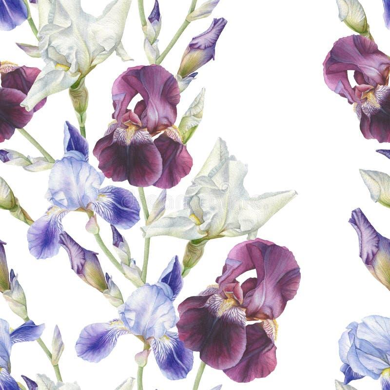 Blom- sömlös modell med vattenfärgiriers stock illustrationer