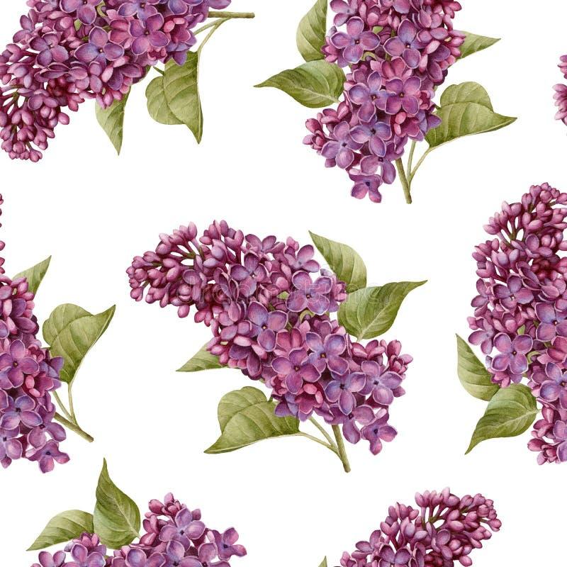 Blom- sömlös modell med vattenfärglilan vektor illustrationer