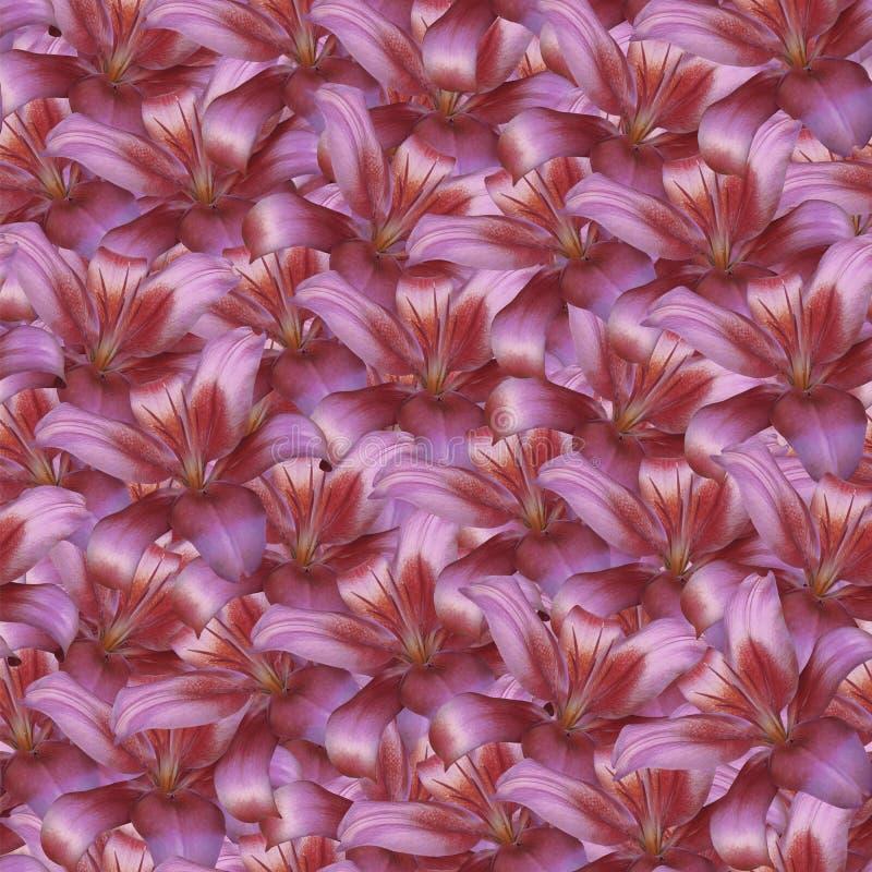 Blom- sömlös oändlig bakgrund Röd blommalilja för design och printing Bakgrund av naturliga blommor arkivfoto