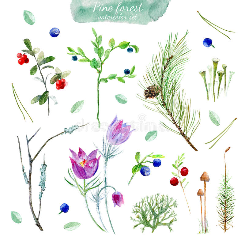 Blom- samling för pinjeskog royaltyfri illustrationer