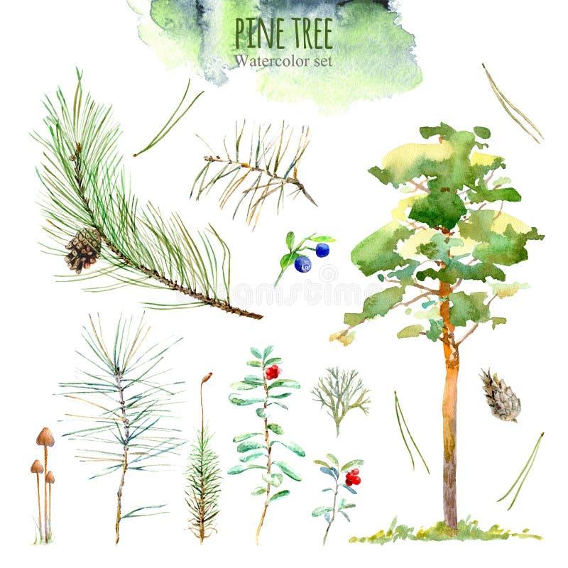Blom- samling för pinjeskog Illustration av ett bär, filial, pinecone, mossa, champinjoner, lingon, blåbär royaltyfri illustrationer