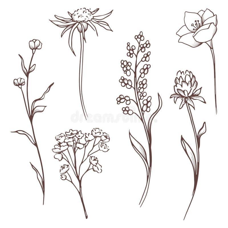 Blom- samling för vektor Den drog handen ställde in blommor och sidor E stock illustrationer