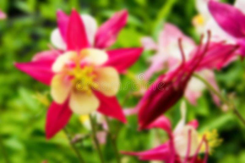 Blom- screensaver för en vykort slapp fokus Bokeh arkivfoto