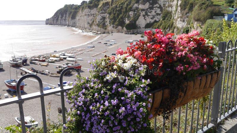 Blom- skärm ovanför stranden på öl i Devon UK royaltyfri fotografi