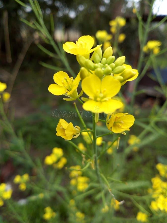 Blom- skönhet royaltyfria bilder