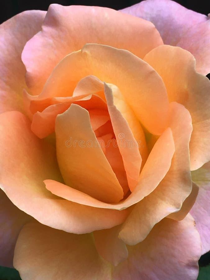 blom- skönhet royaltyfri fotografi