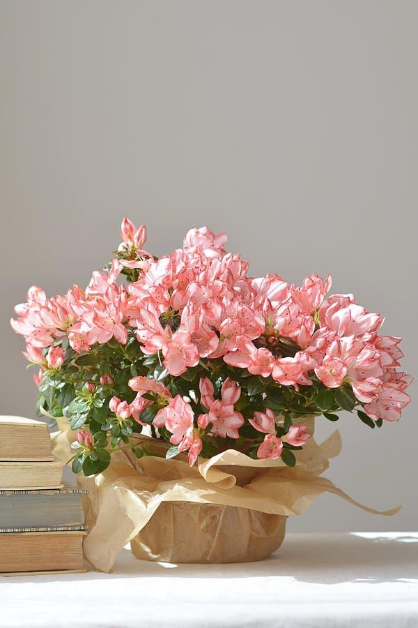 Blom- stilleben med morgonsolen fotografering för bildbyråer