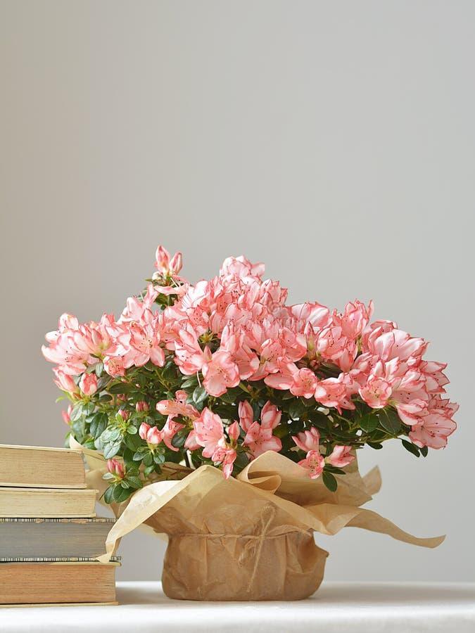 Blom- stilleben med morgonsolen arkivfoto