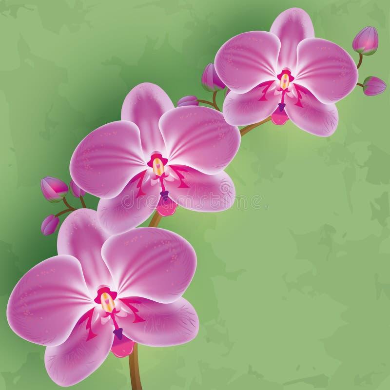 Blom- tappningbakgrund med blommaorchiden vektor illustrationer