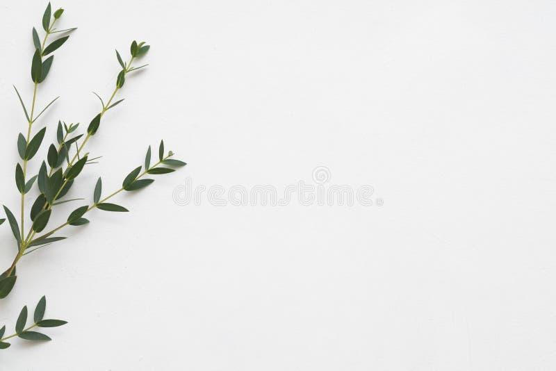 Blom- terapi för bakgrundseukalyptusarom royaltyfria foton