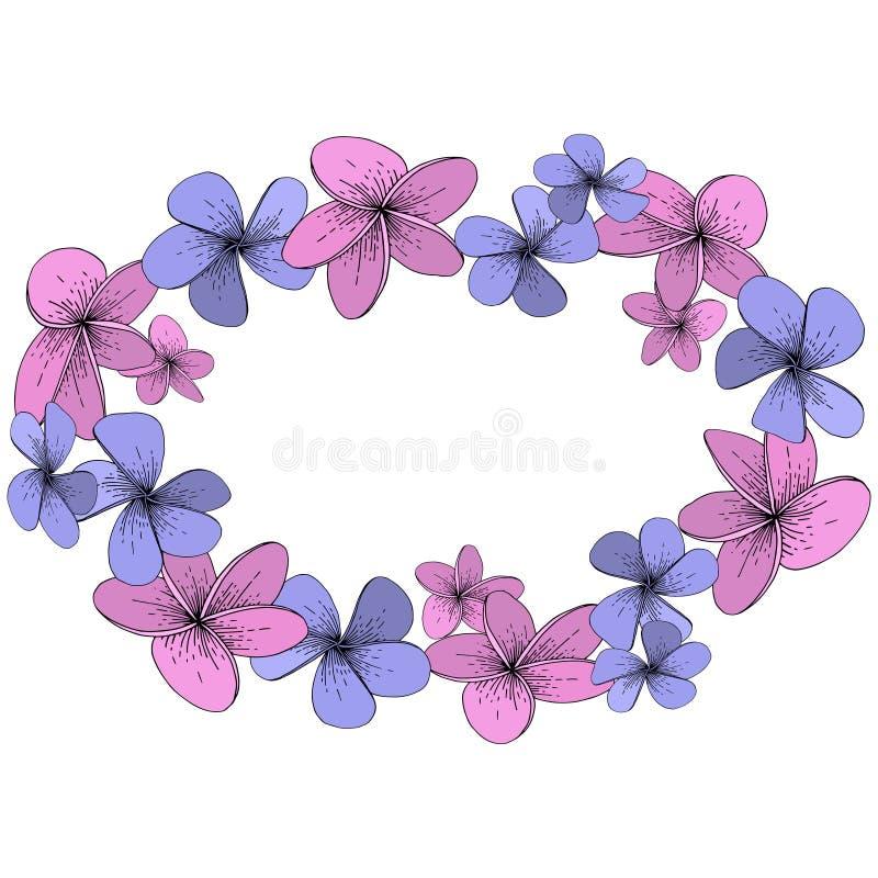 Blom- tropiska blommor för vektorhibiskus Inristad färgpulverkonst på vit bakgrund Fyrkant för ramgränsprydnad vektor illustrationer