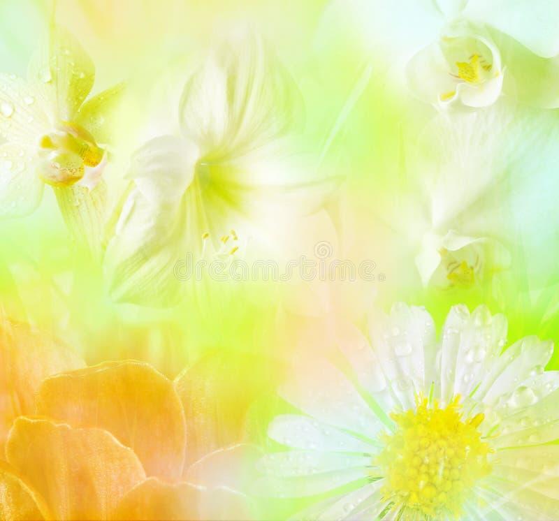 blom- tropiskt för bakgrund stock illustrationer