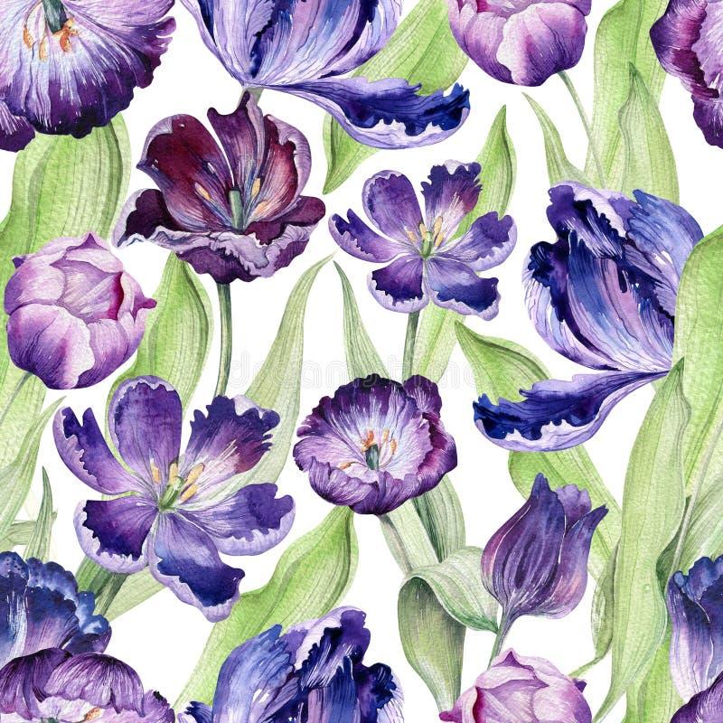 Blom- tulpanbackgraund för vattenfärg Sömlös färgrik vårmodell Violett tulpanväxt för akvarell Purpur blomning royaltyfri illustrationer