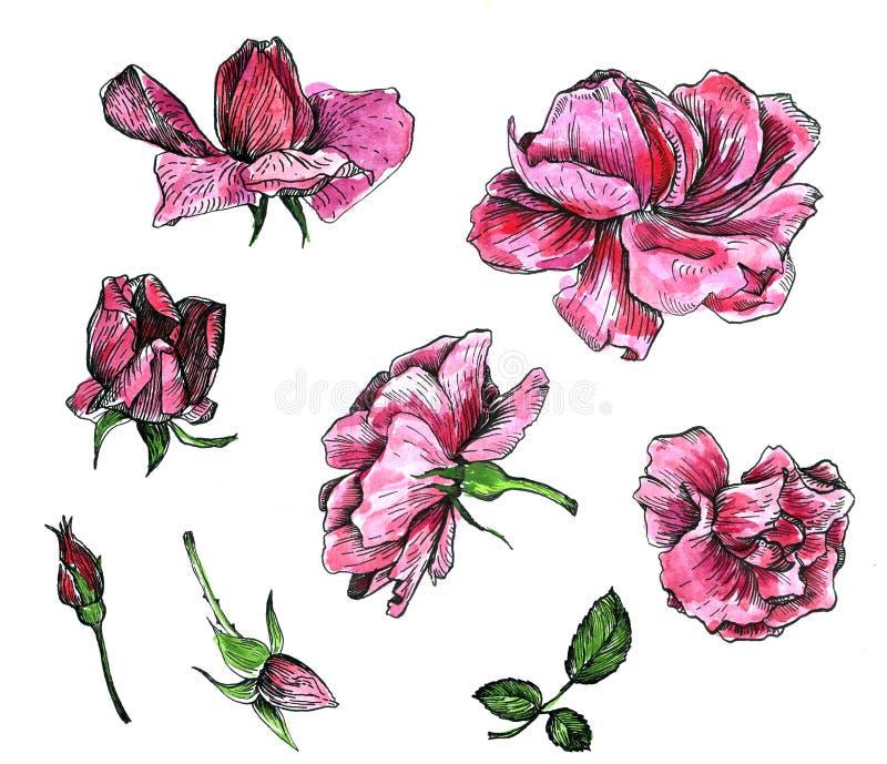 Blom- uppsättning för vattenfärg royaltyfri illustrationer
