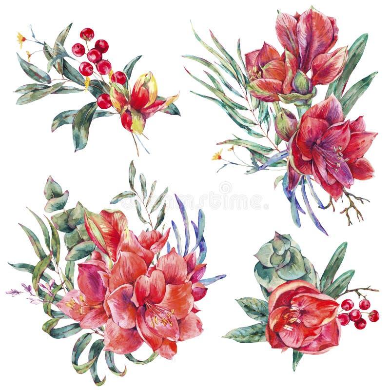 Blom- uppsättning för vattenfärg av röda blommor Amaryllis stock illustrationer