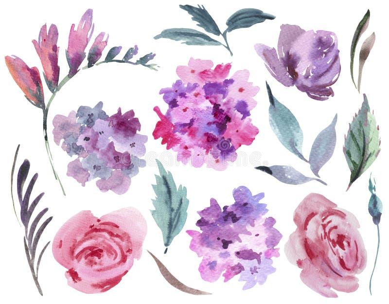 Blom- uppsättning för vattenfärg av rosa rosor, vanlig hortensia, sidor och knoppar royaltyfri illustrationer