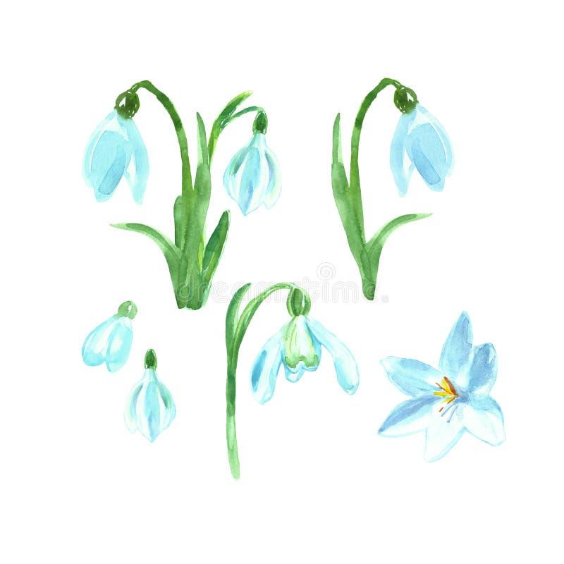 Blom- uppsättning för vattenfärg med vårblommor Handen målade snödroppar royaltyfri illustrationer