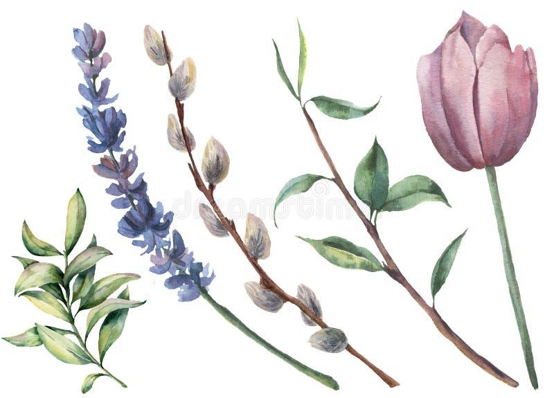 Blom- uppsättning för vattenfärgvår Räcka den målade tulpan, trädfilialen med sidor, den isolerade lavendelblomman, pilen och grö stock illustrationer