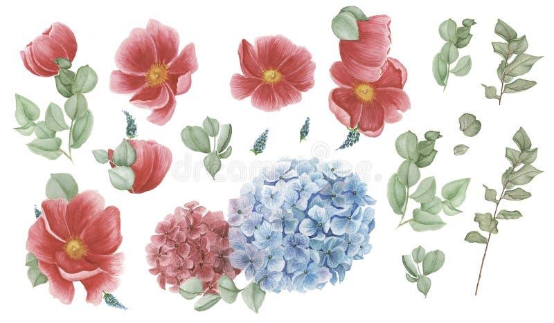 Blom- uppsättning med röda anemoner, röd och blå vanlig hortensia och gröna sidor, vattenfärgmålning stock illustrationer