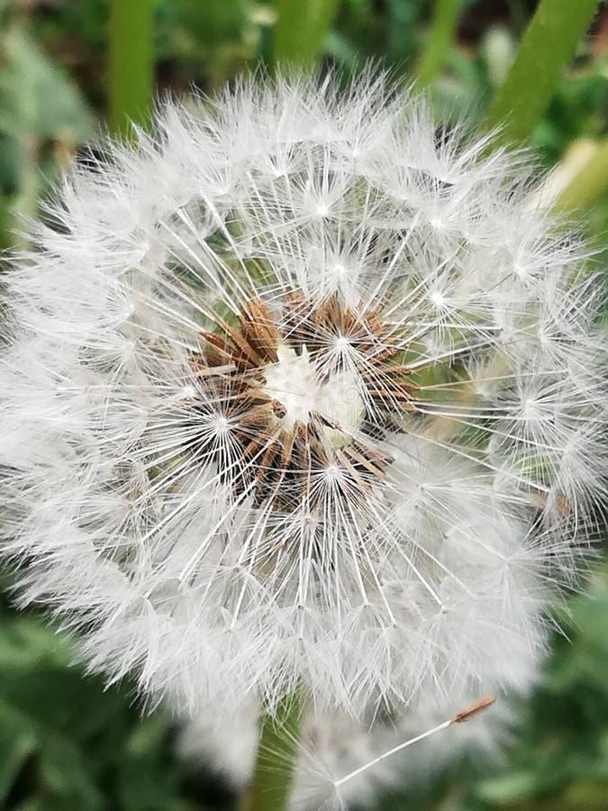 Blomblommafjäril arkivbilder