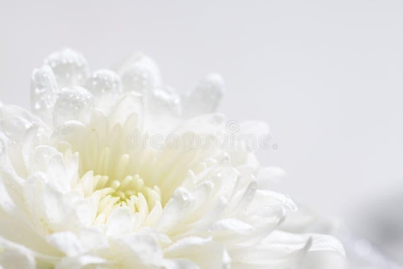 Blomkors liv på vit bakgrund royaltyfri fotografi