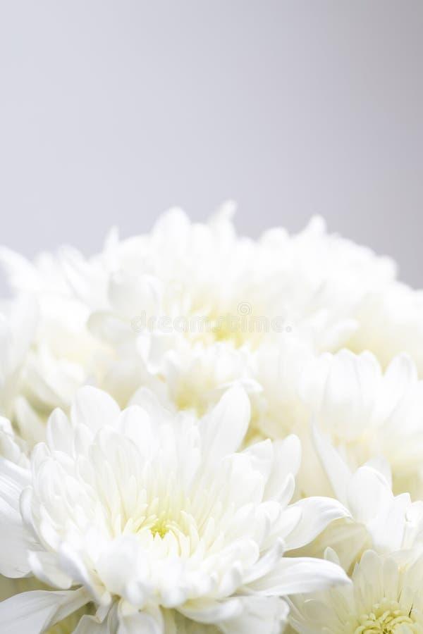 Blomkors liv på vit bakgrund royaltyfri bild