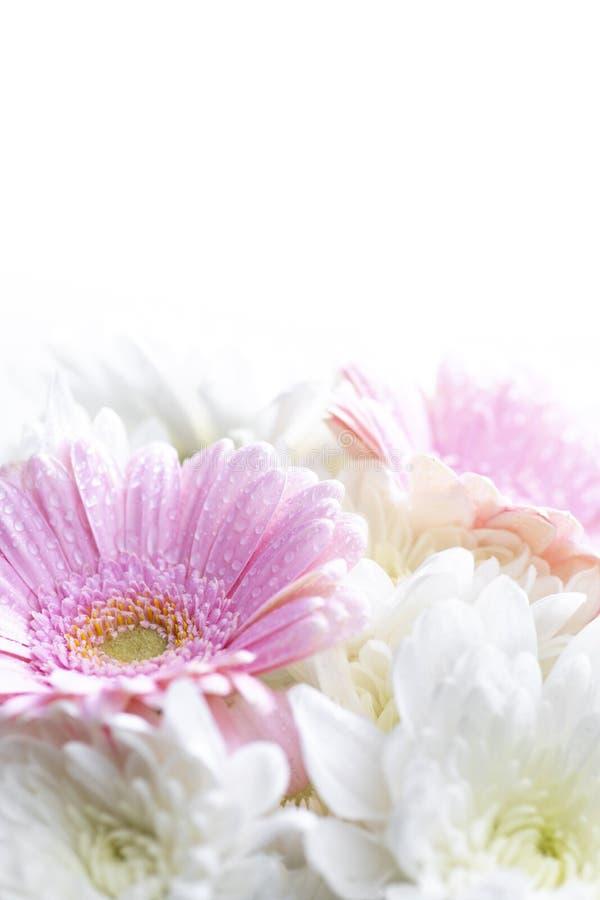 Blomkors liv på vit bakgrund arkivfoton