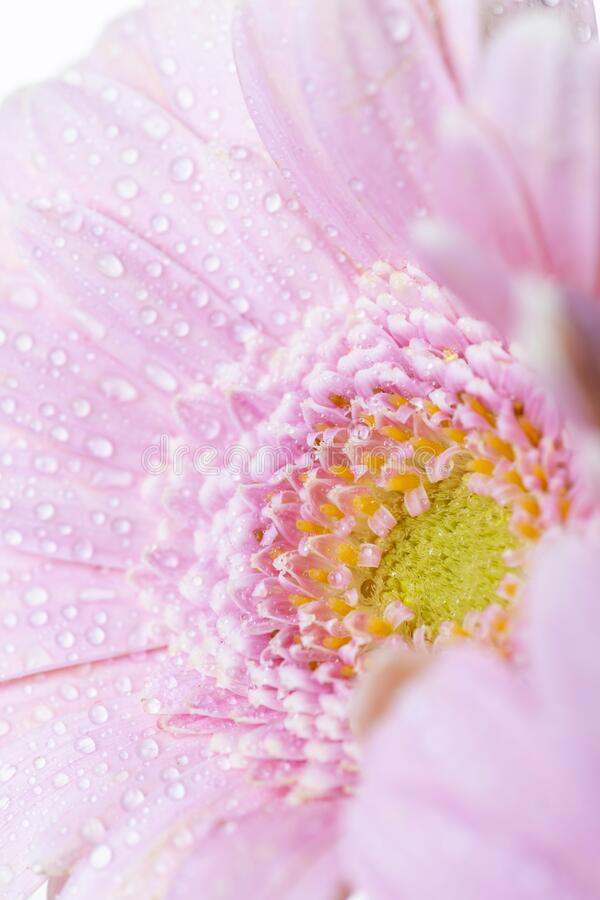 Blomkors liv på vit bakgrund arkivfoto