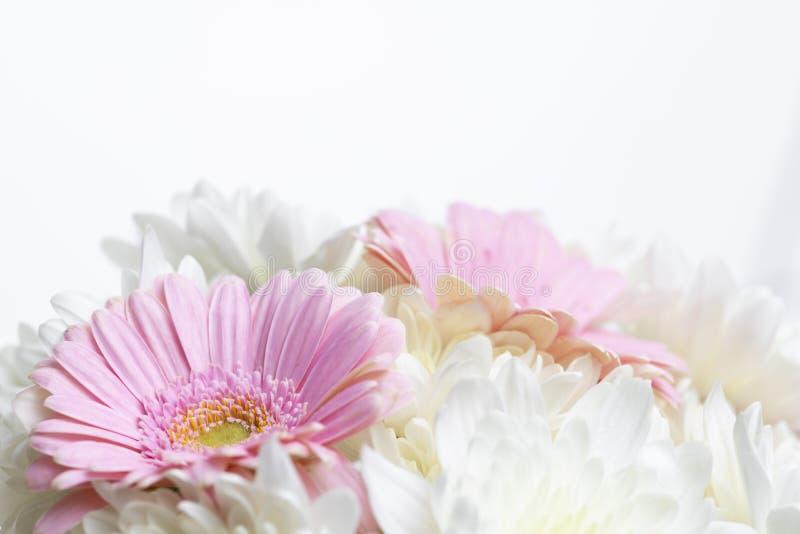 Blomkors liv på vit bakgrund royaltyfria foton