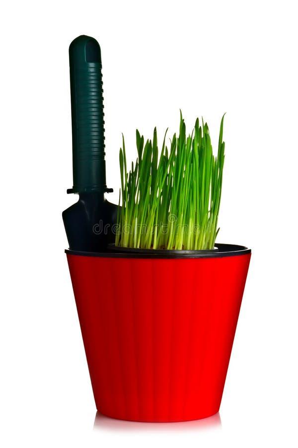 Blomkruka med gräs royaltyfria bilder
