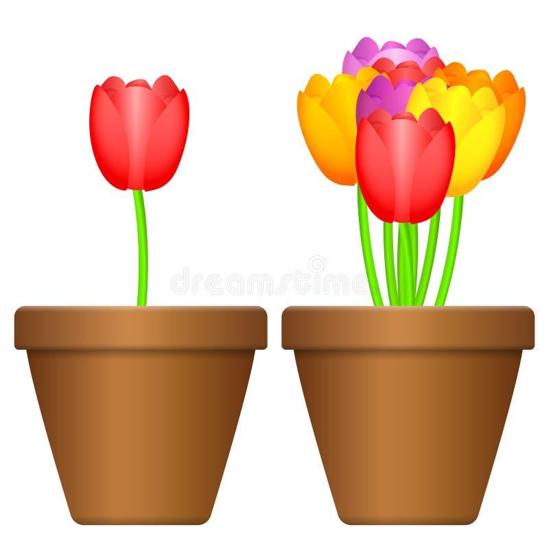 Blomkruka och tulpan royaltyfri illustrationer