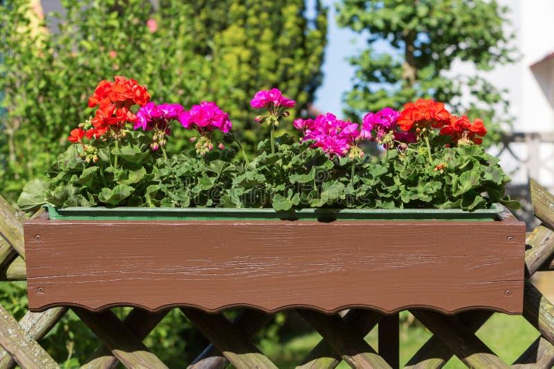 blomkruka på bakgrunden royaltyfri fotografi