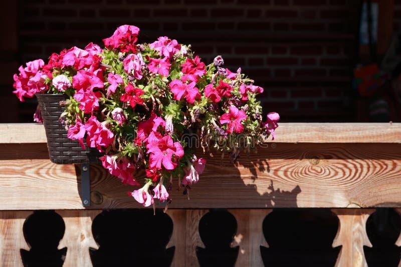 Blomkruka på balkong royaltyfri bild