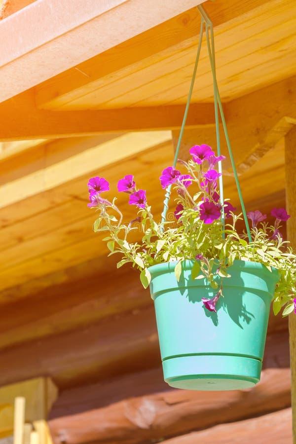 Blomkruka på en brun trävägg arkivbilder
