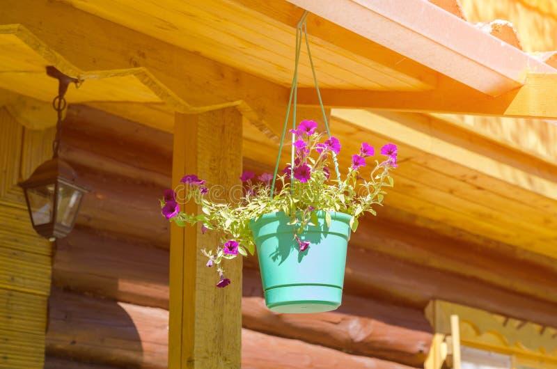 Blomkruka på en brun trävägg royaltyfri foto