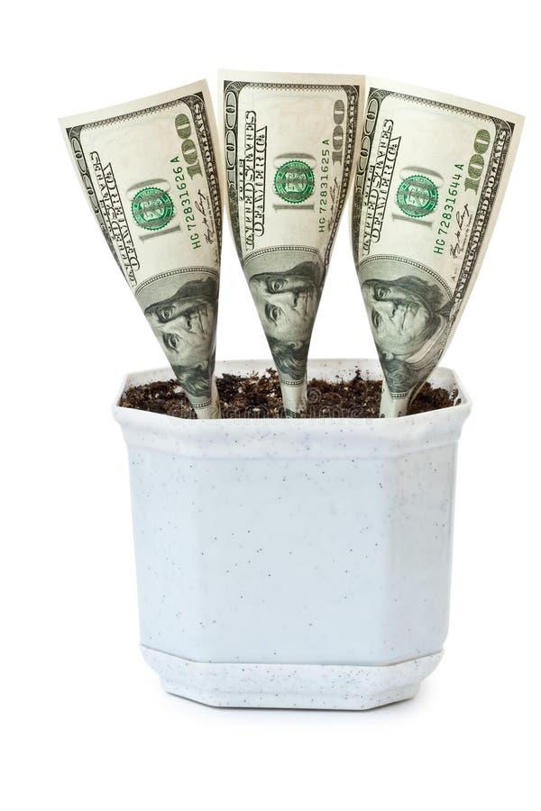 blomkrukan växer pengar royaltyfri fotografi