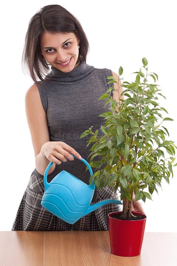 blomkrukar bevattnar växtkvinnan royaltyfri foto