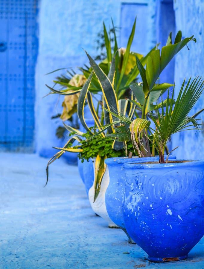 Blomkrukor med härliga växter på tröskeln av en blått målade det traditionella huset, Indien royaltyfria foton
