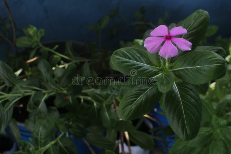 Blomkrukor och sidor royaltyfria foton