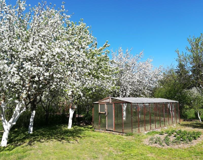 Blomma äpplefruktträdgården och skuggan av dem på gräset royaltyfria bilder