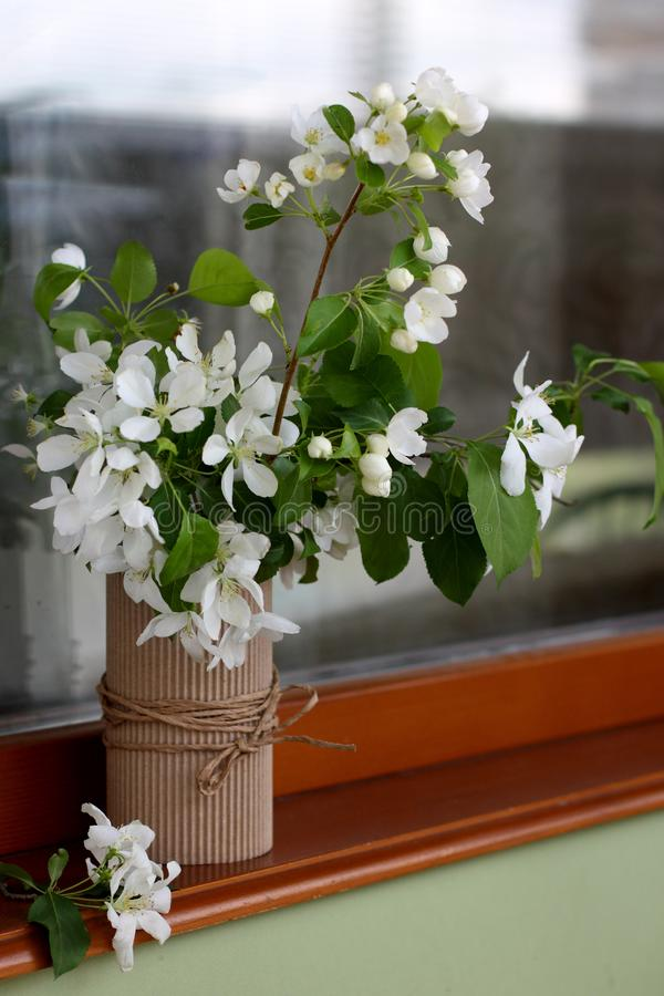 Blomma äppleträdet i en vas på fönstret arkivfoton