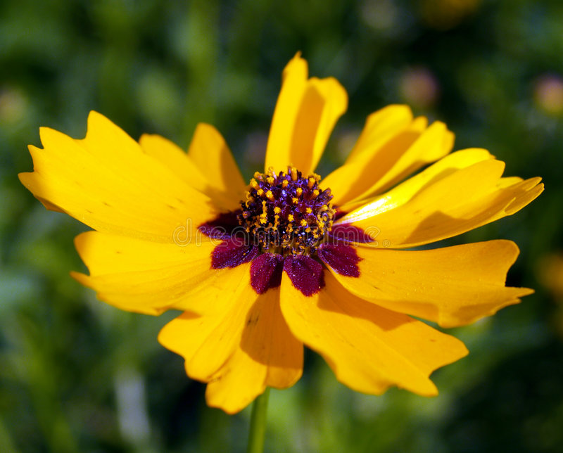 blomma 10 royaltyfri bild